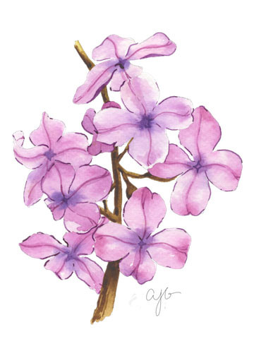 blossom branch.jpg