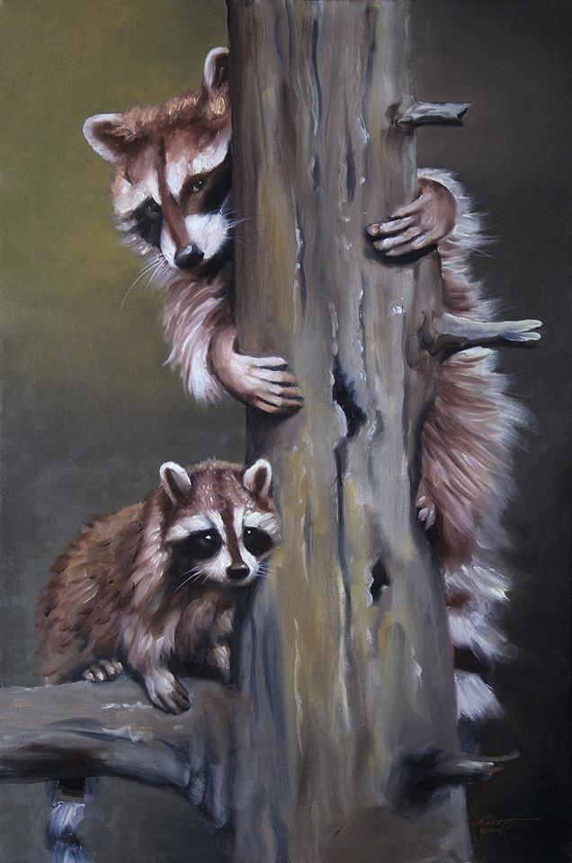 R-37-Raccoons.jpg