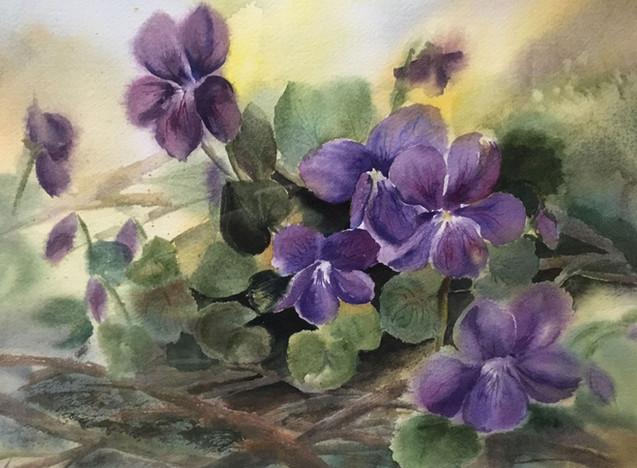 Wild Violets (K48)