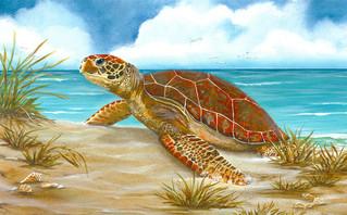 Perfect Spot - Turtle
