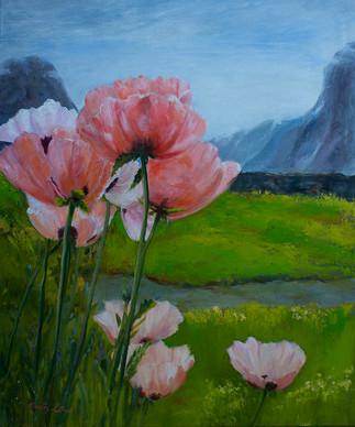 Poppies at Stalheim Norway.jpg