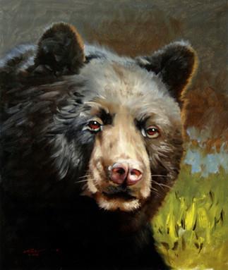 B-66-bk Bear.jpg