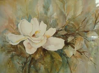 White Magnolia (K90)