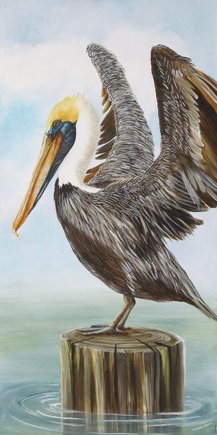 Pier 1 - Pelican