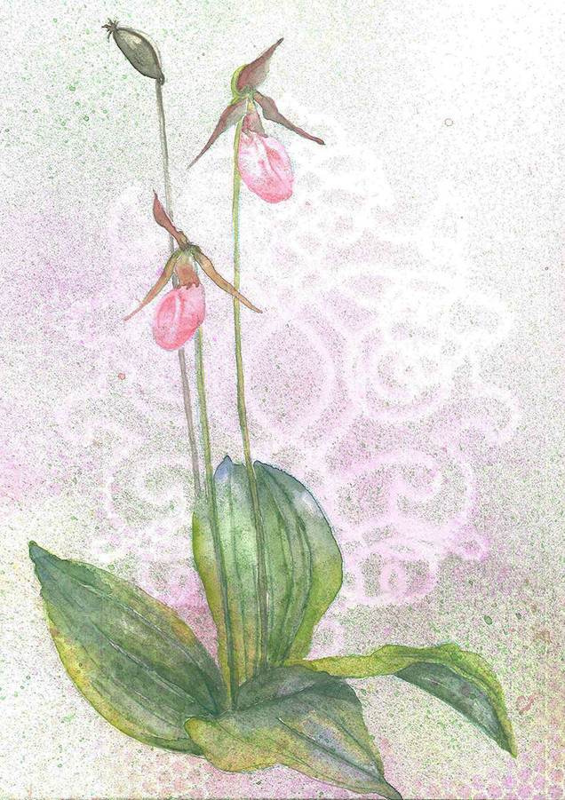 Pink Lady's Slipper.jpg