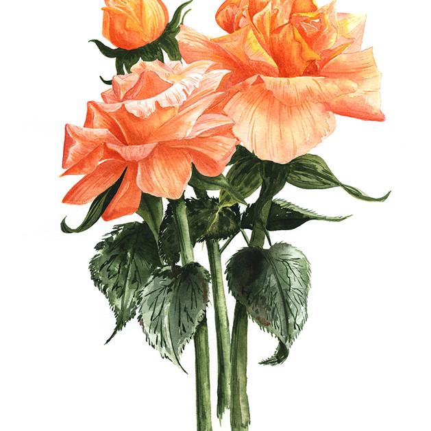Womble Orange Roses Painting.jpg