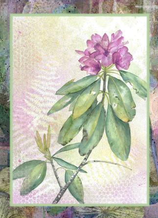 Rhododendrum-2-Smith.jpg