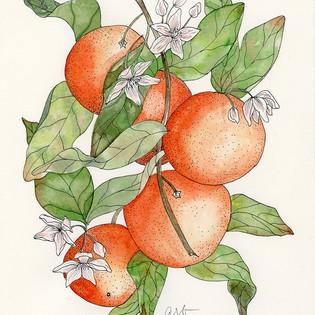 inky oranges.jpg