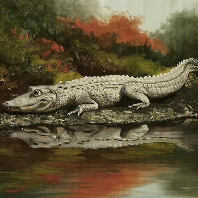 A-76-alligator.jpg