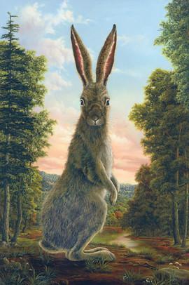 Lepus (Rabbit Collections)