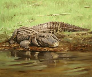 A-67-alligator.jpg