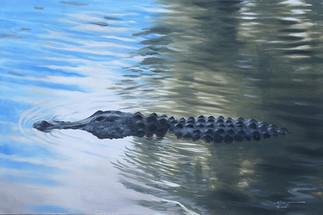 A-123-Alligator.jpg