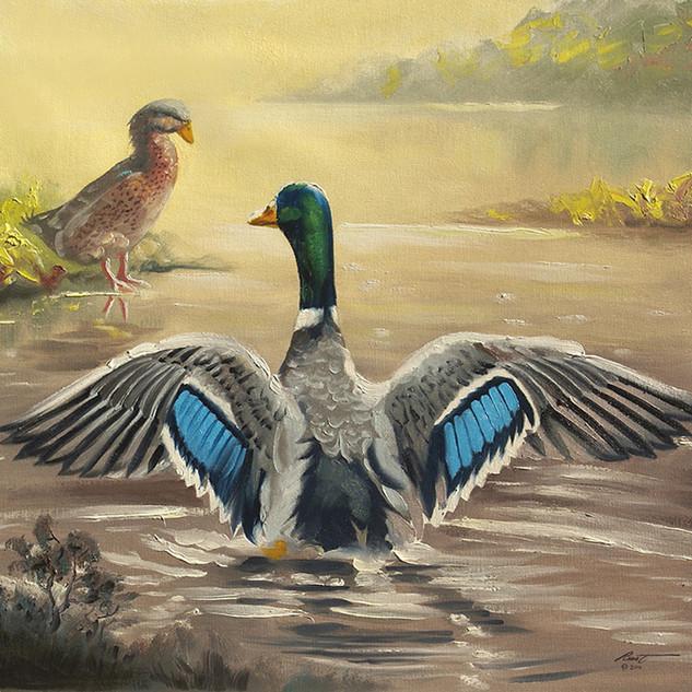 D-120-ducks.jpg