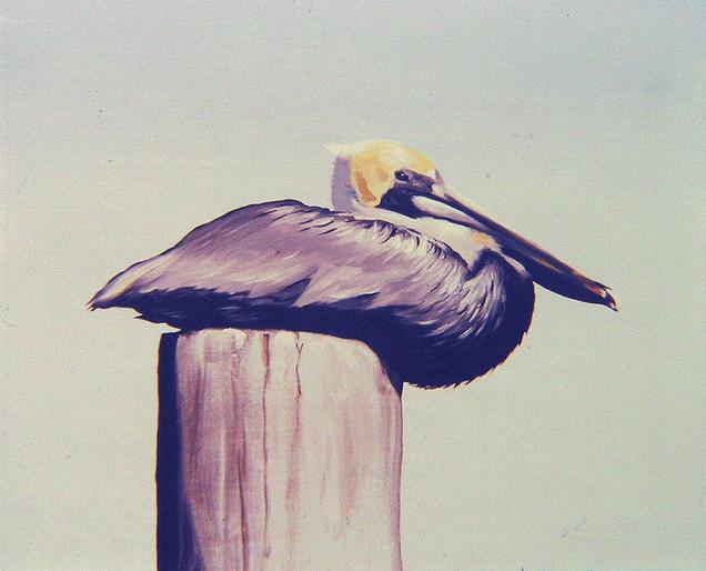 P-11-pelican.jpg