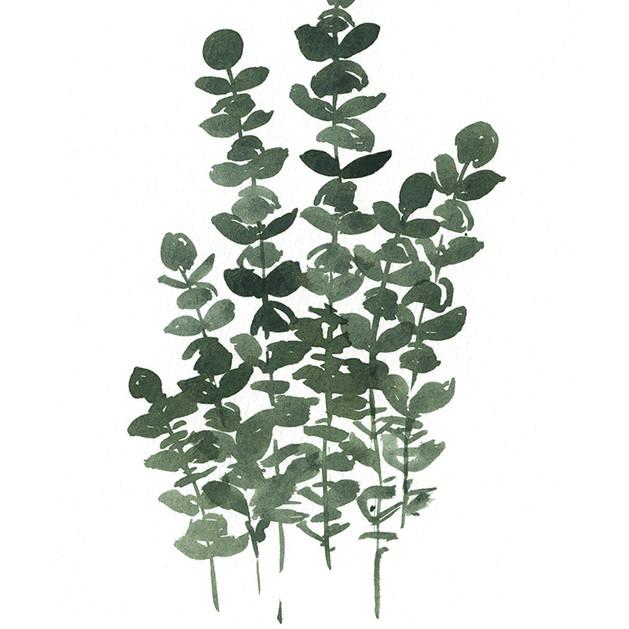 Eucalyptus Bunch.jpg