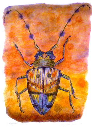 Malaysia (Beetle)