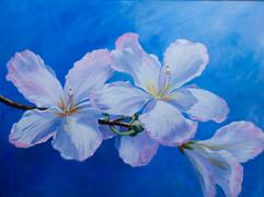 Cherry Blossoms-1jpg.jpg