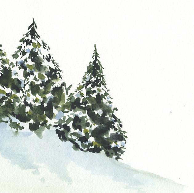 Three Evergreen trees on a hill.jpg