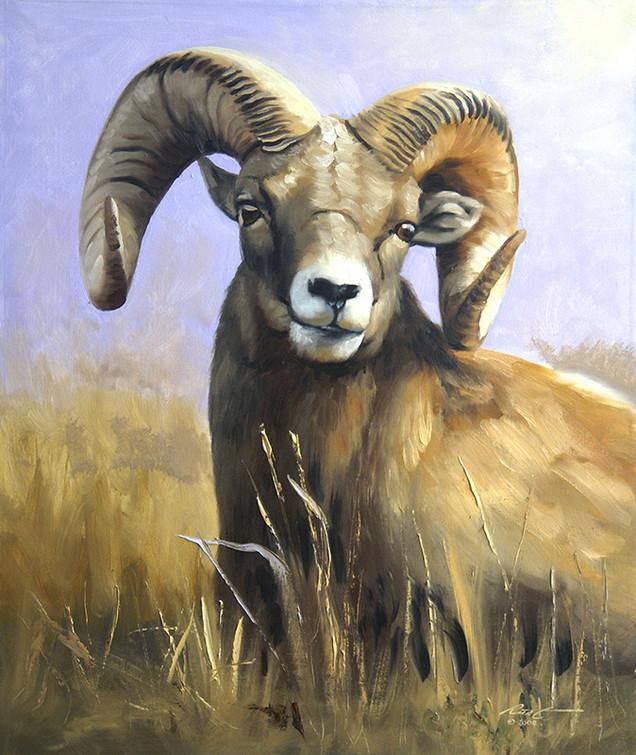 S-62-Bighorn Sheep.jpg