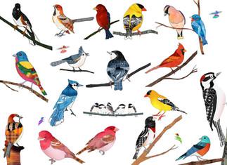 All Birds