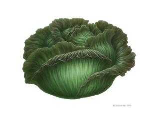 Fruit-lettuce.jpg