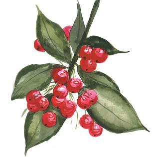 small holly berry, small three trees