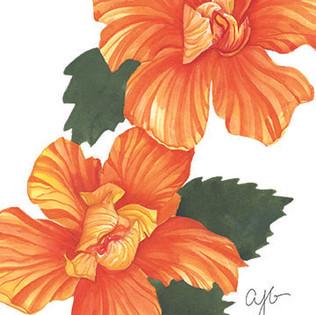 orange hibiscus.jpg