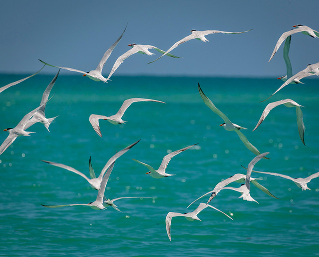 Flying Sea Birds