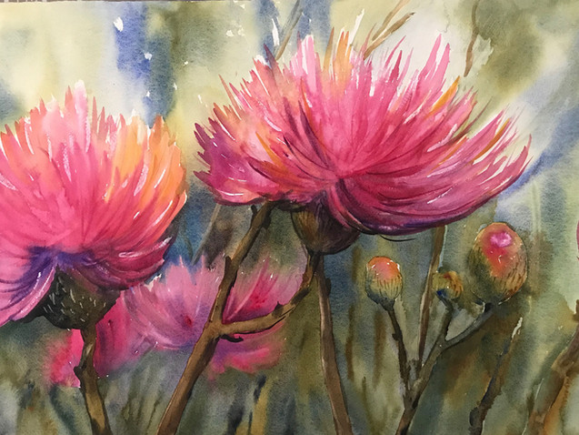 Pink Thistle Flowers (K65)