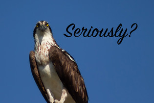 Osprey-7.jpg
