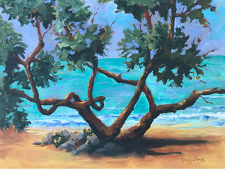 Gumbo Limbo Tree of Florida (K14)