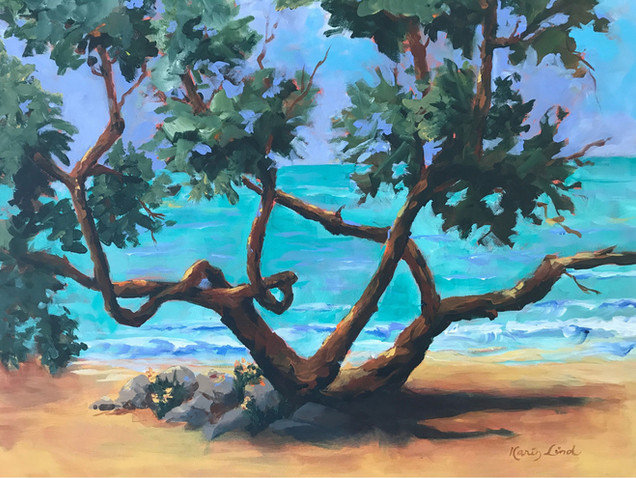 Gumbo Limbo Tree of Florida (K14)