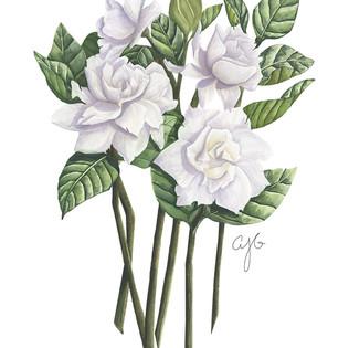 jane's gardenias.jpg