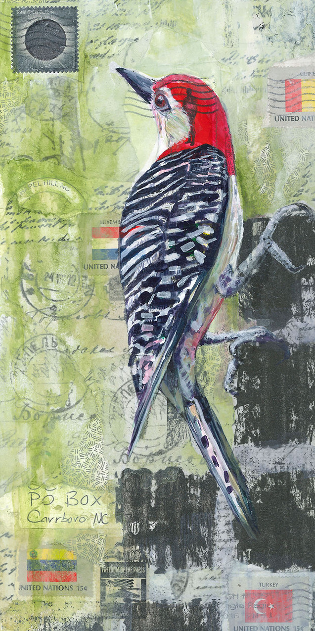 Red bellied Woodpecker from the airmail