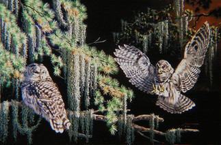 O-22-Barred Owls.jpg