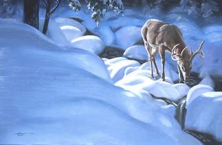 D-141-deer.jpg