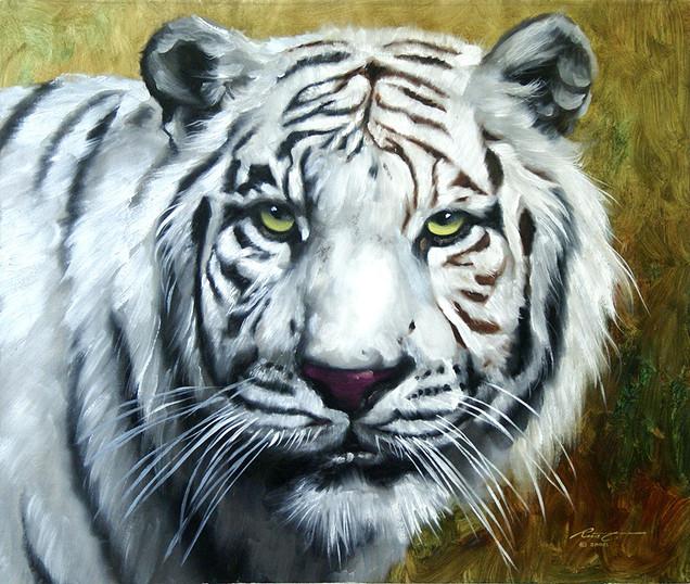 T-44-white Tiger.jpg