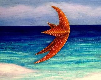 Freedom (Happy Starfish Collection)