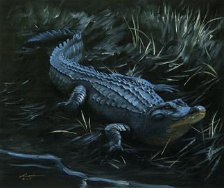 A-77-alligator.jpg