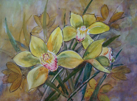 Yellow Orchids (K91)