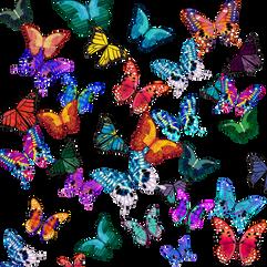 Butterflies (white background)