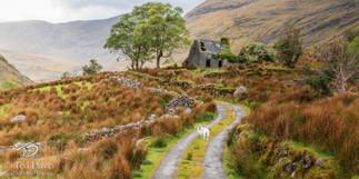Irish Ancestry Count Kerry Ireland.jpg