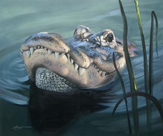 A-75-alligator.jpg