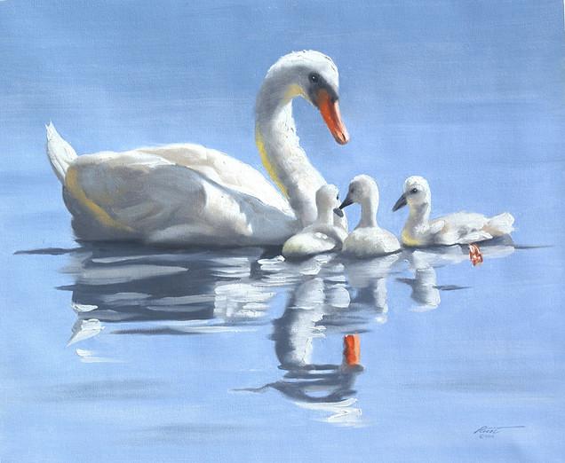 S-87-swans.jpg