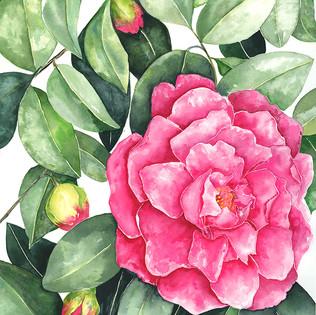 Camellia Bush.jpg