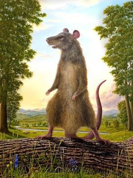 Rattus (Other Animals - Rat)