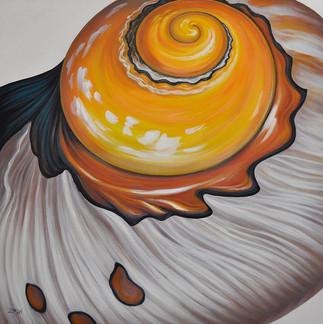 Sunny Side Up -Seashell