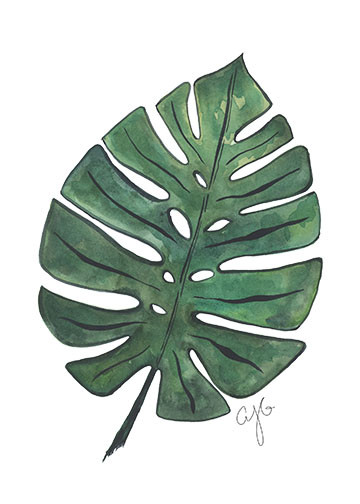 monstera leaf.jpg