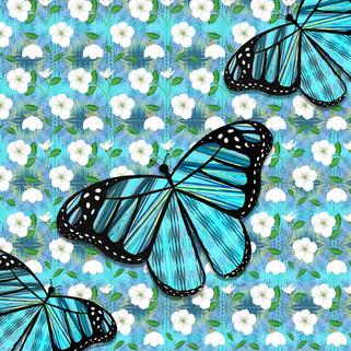 Butterfly-12.jpg