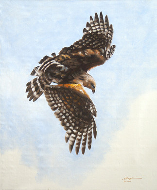 H-9-rs Hawk.jpg